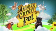 America's Cutest Pets