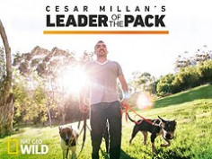Cesar Millan's Leader of the Pack