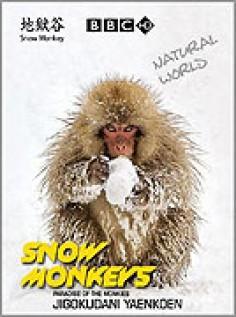 Sněžné opice